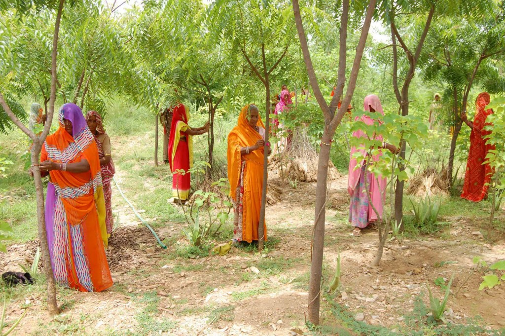 Image result for india piplantri trees