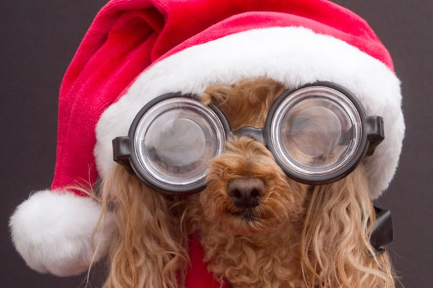 christmas-pet-costume-2